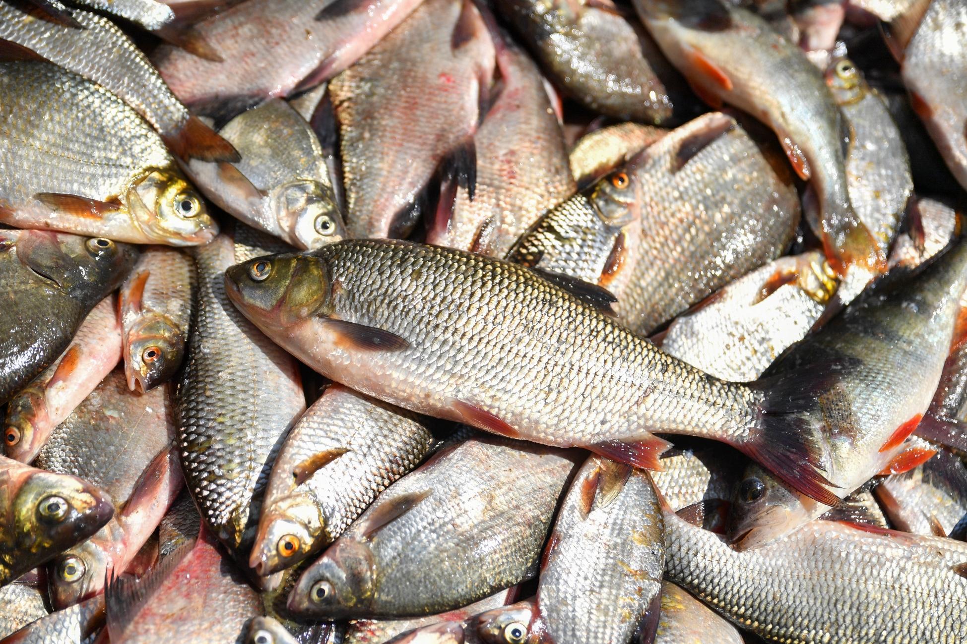 этому картинки где много рыбы этого нужно иметь