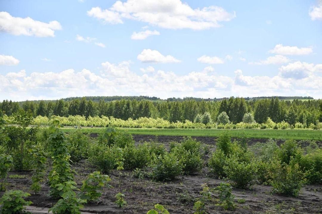 В Саратовской области высадили свыше 3 млн деревьев