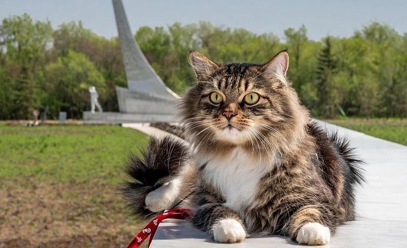 Парк покорителей космоса растрогал путешественника с котом